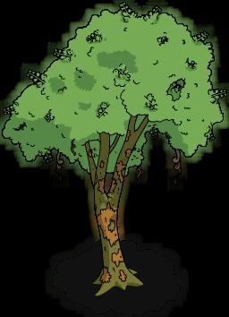 Brazilwood Tree.png
