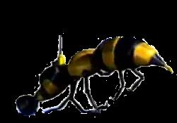Wasp Camera.png