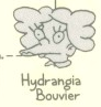 Hydrangia Bouvier.png