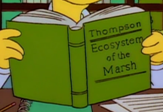 Ecosystem of the Marsh.png
