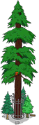 File:World's Largest Redwood Level 9.png