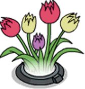 Holo Tulips.png