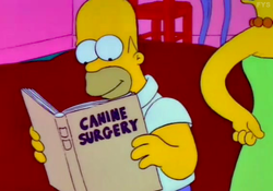 Canine Surgery.png