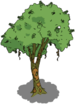 Brazilwood Tree.png
