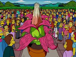 250px-Sumatran_Century_Flower.png