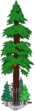 World's Largest Redwood Level 9.png