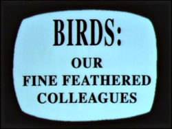 Birds Our Fine Feathered Colleagues.png